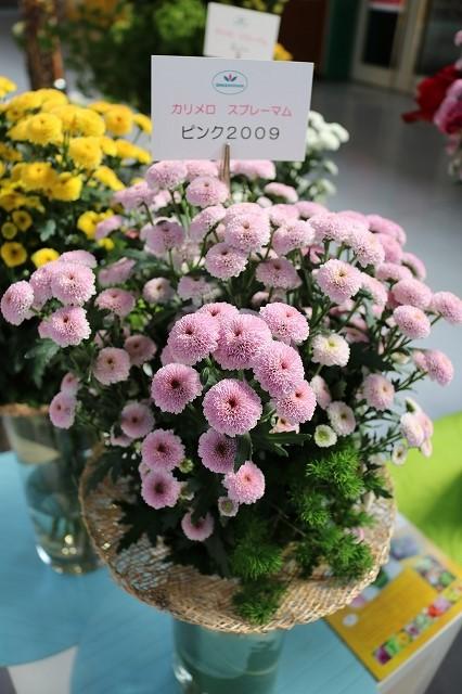 ピンク2009