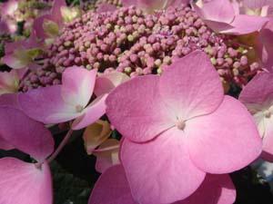 flowerpart2.JPG