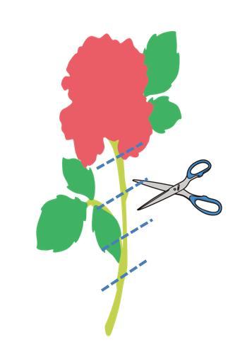 rosecut.JPG