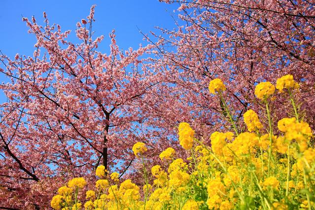 springImage.jpg