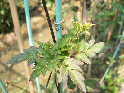 leaf3.jpg