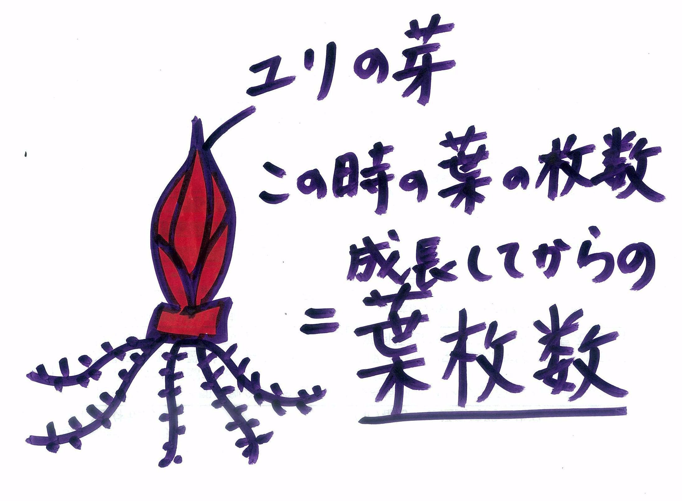 yomaisu.JPG